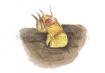 Magicicade-larve3-14475