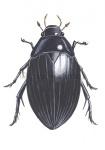 Grote spinnende watertor-14.1027