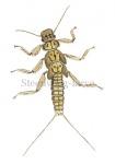 Steenvlieg-larve-14.1032