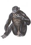 Bonobo-11191