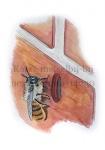 Rosse metselbij-bij nest in muur-14230