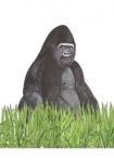 Gorilla-11227