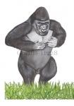 Gorilla-11228