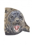 Grijze zeehond-kop-11080