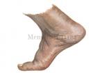 Mens-voet-11124