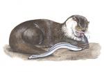 Otter-eet een paling-11110