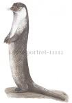 Otter-portret-11111
