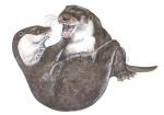 Otter-spelend-11109