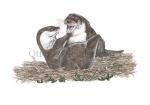 Otter-spelend-11109-1