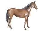 Paard-11187