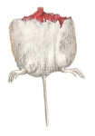 Veldmuis-achterlijf-11091