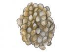 Wulk-eieren-12143