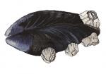 Zeepokken op mossel-12091