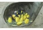 Gewone aardhommel-Koningin broedt op eieren-140040