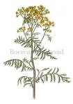 Boerenwormkruid-18177
