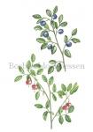 Bosbes-bloei-bessen-18208