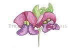 Bruine boon-bloem-180016