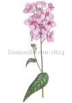Damastbloem-182465