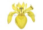 Gele lis-bloem-182403