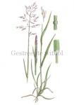 Gestreepte witbol-18203