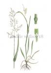 Gladde witbol-18204
