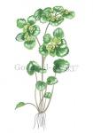 Goudveil-182337