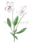 Heidemelkviool-182486