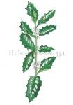 Hulst-bloei-182451