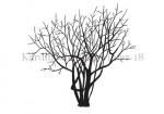 Kardinaalsmuts-silhouet-winter-182328
