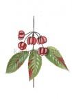 Kardinaalsmuts-vruchten-18150