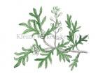 Kleine varkenskers-bloei-18247