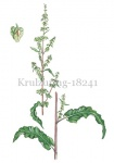Krulzuring-18241