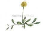 Muizenoor-18172