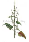 Ridderzuring-18041-2