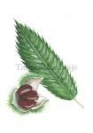 Tamme kastanje-blad-noot-182384