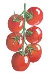 Tomaten-182447