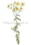 Viltig kruiskruid-18207