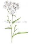 Wilde betram-182441