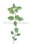Wilde marjolein-kiemplant-182434