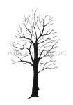 Witte abeel-silhouet-winter-182326