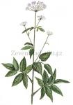 Zevenblad-18042