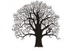 Zomereik-silhouet-winter-18325