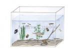 Aquarium-310090
