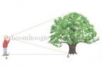 boomhoogte meten-310044