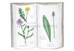 Herbarium-310093