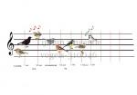 Tijdlijn zingende vogels-310046