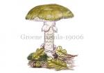Groene rusula-19006