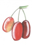 Gele kornoelje-bessen-180002.82
