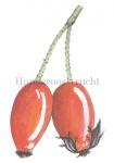 Hondsroos-vrucht-180002.79