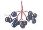 Rode kornoelje-bessen-180002.69